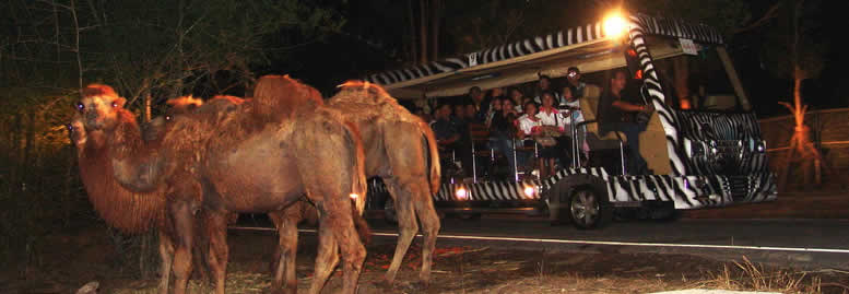 nightsafari in Chiang Mai Thailand